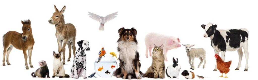 Banner gezelschap dieren 2